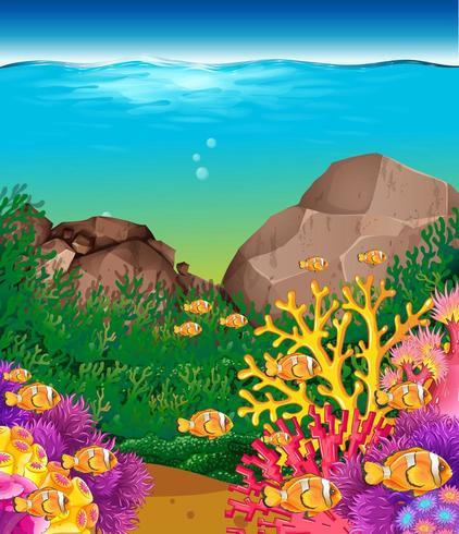 Cena subaquática com peixes e recifes de corais