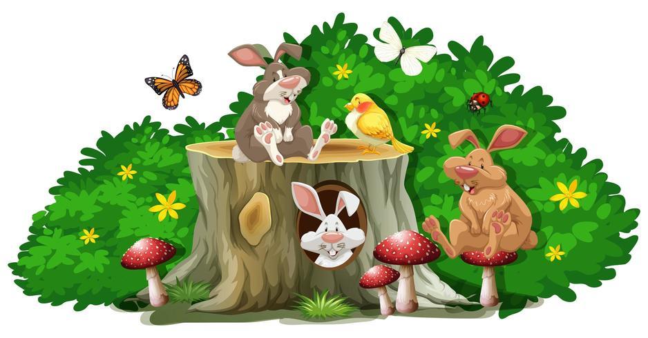 Conigli e insetti nel giardino