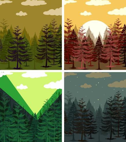 Quattro scene di foreste di pini