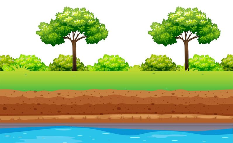 Grüne Bäume und Büsche entlang des Flusses