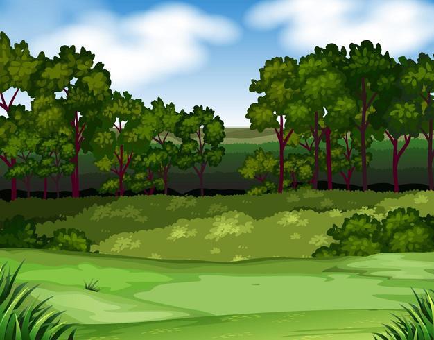 Exuberante escena de bosque y campo vector