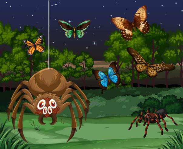 Butterflies and spiders at night