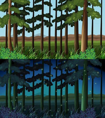 Cena da floresta durante o dia e a noite