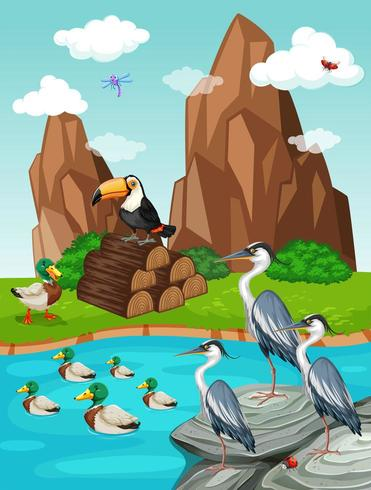 Pájaros y patos junto a un estanque vector