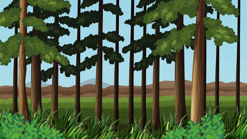 Escena del bosque con árboles en frente del campo