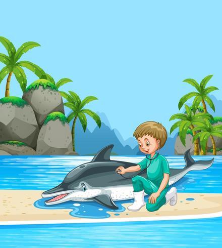 Veterinário masculino examinando golfinho na praia