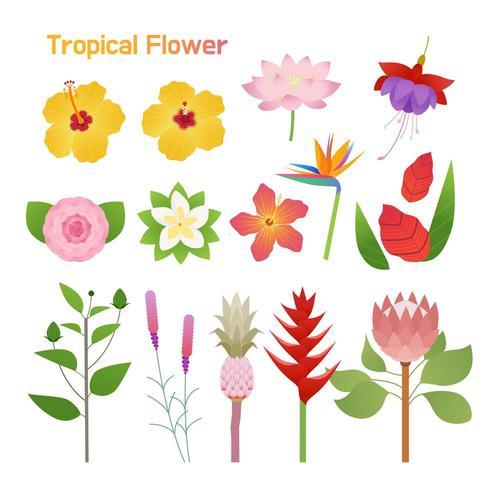 Conjunto de flores tropicales vector