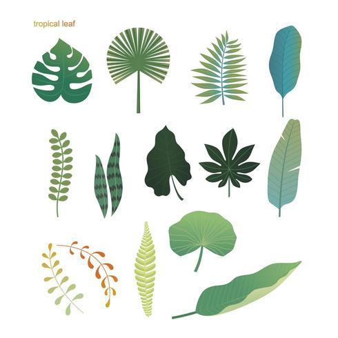 Conjunto de varias hojas tropicales vector