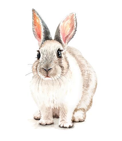 Ritratto di coniglio Illustrazione disegnata a mano dell'acquerello vettore