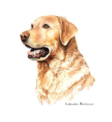 Aquarelle portrait dessiné à la main de chien Labrador Retriever vecteur