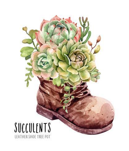 Aquarel collectie van vetplanten in lederen schoen boot tuin.