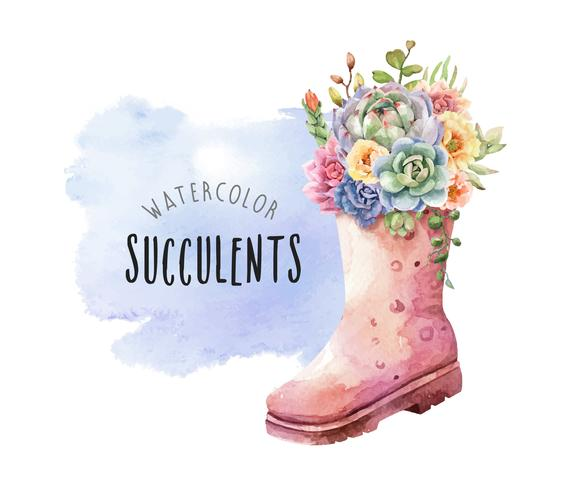 Watercolor succulents in tall rain boots on watercolor background. vector