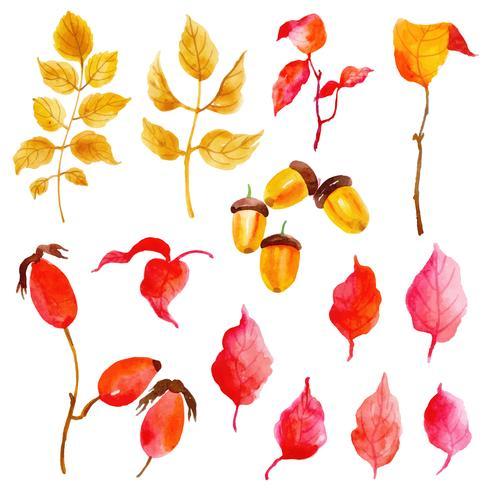 Mooie aquarel herfstbladeren collectie