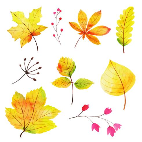 Vacker akvarell Autumn Leaves Collection