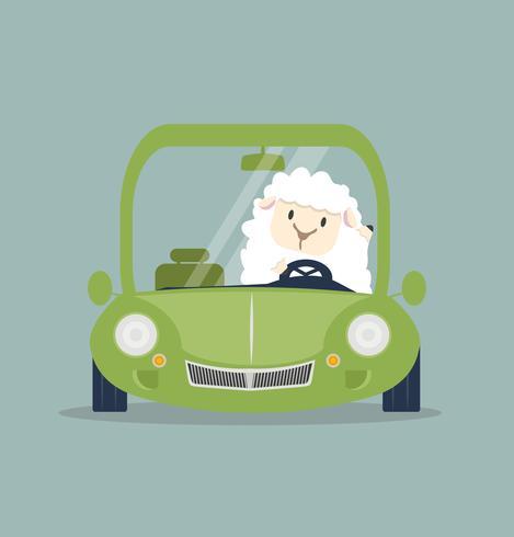 Nette weiße kleine Schafe, die grünes Auto fahren