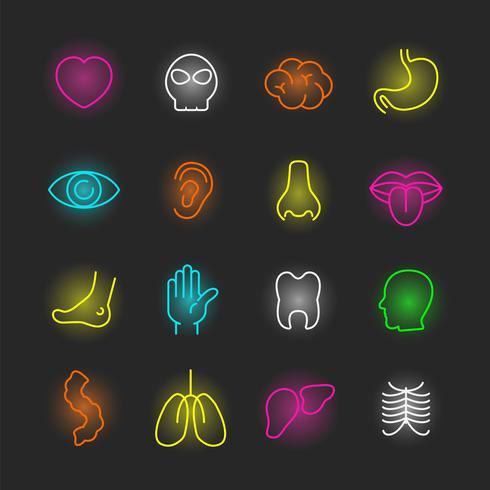 conjunto de iconos de neón de órgano vector