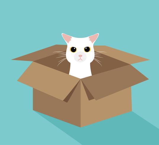 Lindo gato blanco en la caja