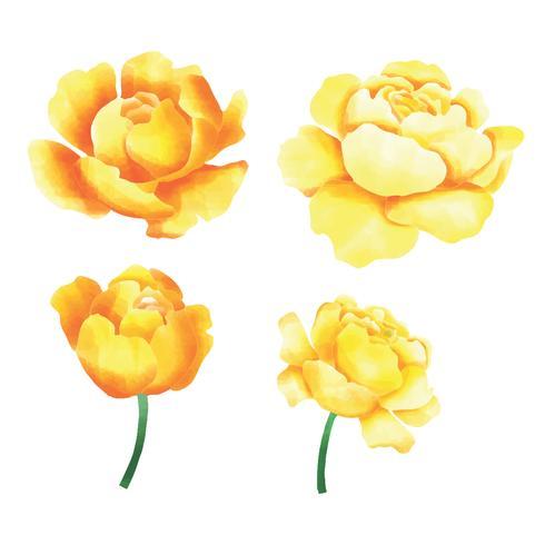 akvarell gul ros set
