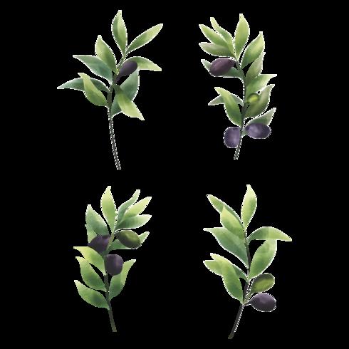 olivblad set i akvarell stil