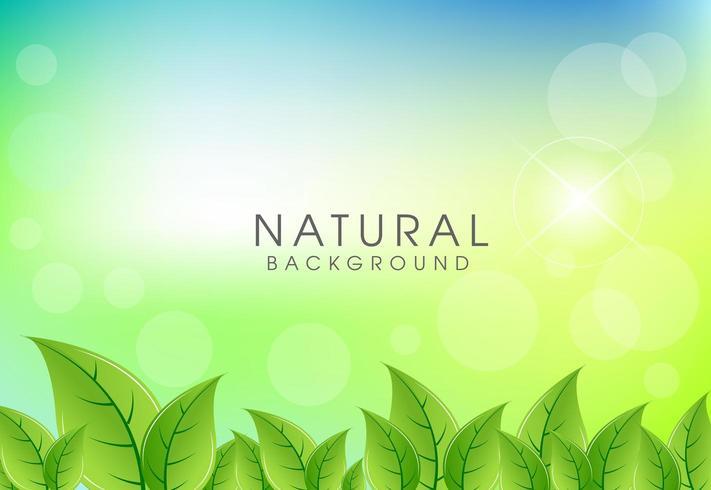 Fondo natural con fondo de hojas verdes vector