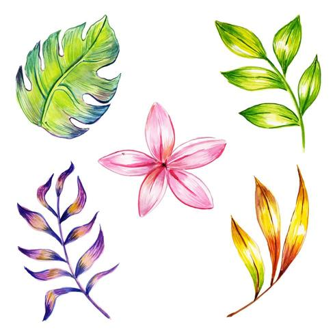 Aquarelle Collection Fleurs et Feuilles Hiver et Nouvel An vecteur