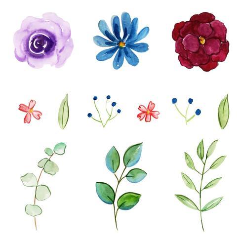 Aquarelle Collection Floral et Feuilles vecteur