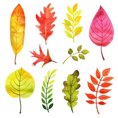 Collection de feuilles changeantes