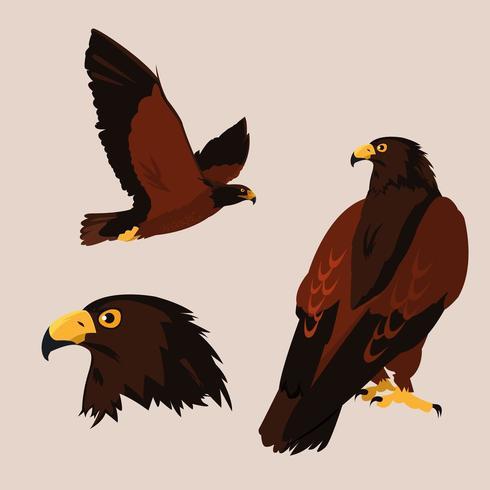 impondo pássaros falcões com poses diferentes vetor