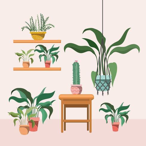 plantes d'intérieur dans des cintres en macramé et une chaise en bois