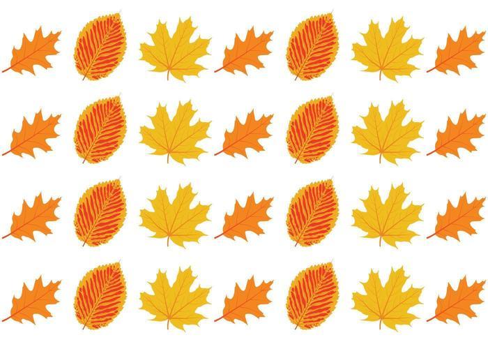 Jeu de feuilles d'automne