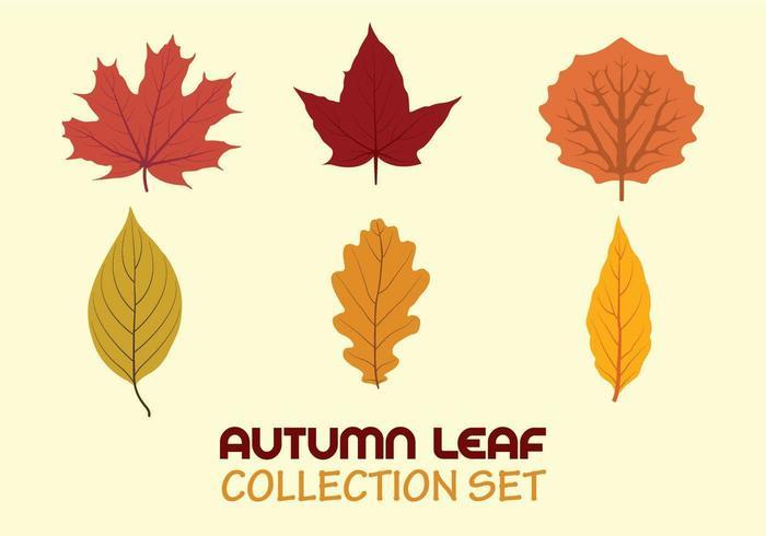 Autumn leaf collection set
