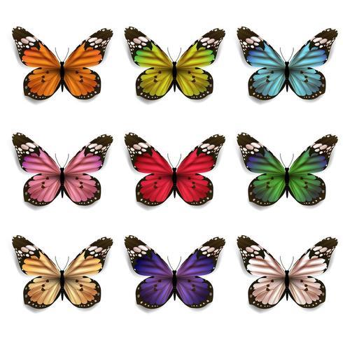 Conjunto de mariposas coloridas