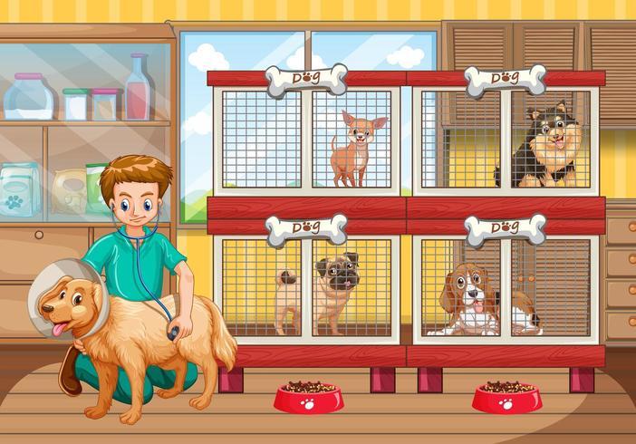 Veterinario che controlla molti cani in ospedale
