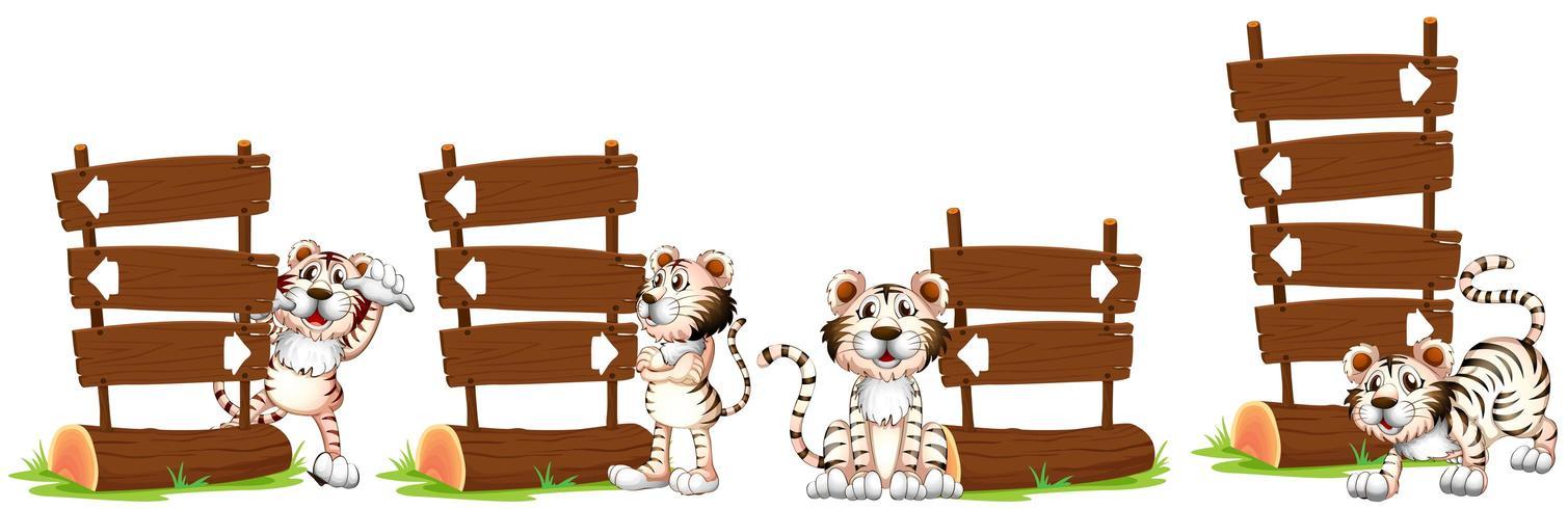 Witte tijgers bij het houten bord