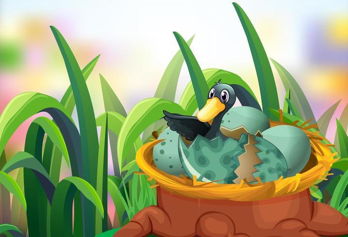 Garden scene with ducks hatching eggs