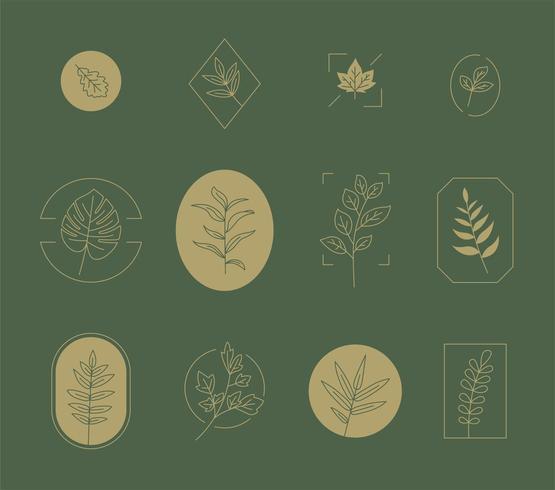Monochromatisch botanisch logo collectie set.