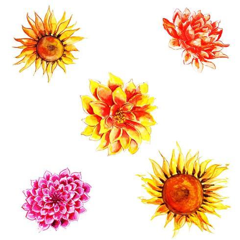 Mooie aquarel herfst bloemencollectie vector