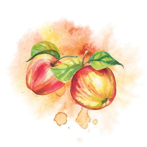 Mogna äpplen i akvarell vektor