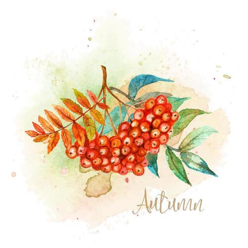 Cartão postal de aquarela outono com uma primavera de Rowan
