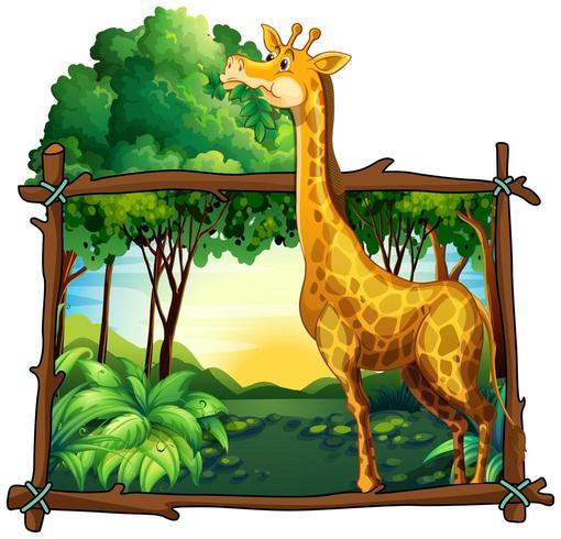 Giraffe eating leaves on the tree vector