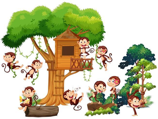 Affen spielen und klettern das Baumhaus hinauf