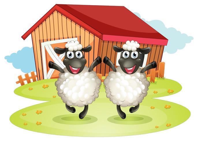 Två svarta får med en ladugård på baksidan