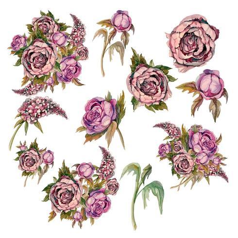 Ensemble de délicates fleurs aquarelles. Roses pivoines lilas.