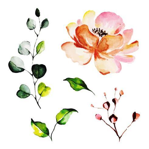 Hermosa acuarela floral y hojas vector