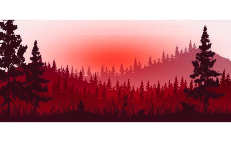 La forêt dans le brouillard