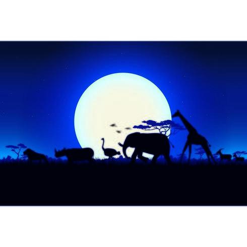 Safari De Nuit En Afrique