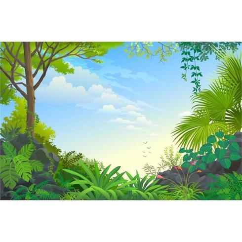 Belle jungle dans la matinée