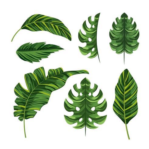 conjunto de folhas exóticas palmeiras tropicais