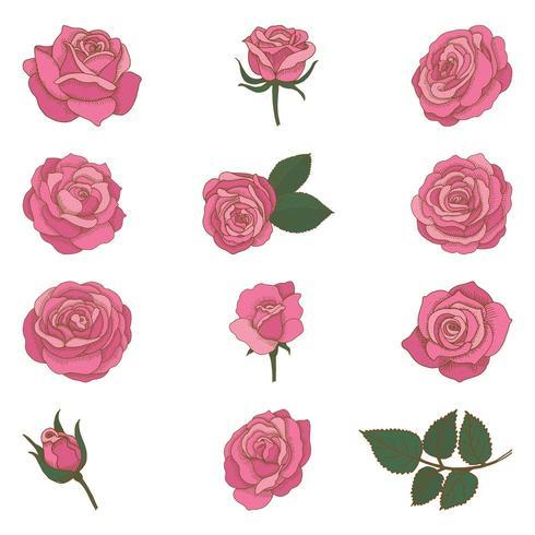 Set of vintage hand drawn roses