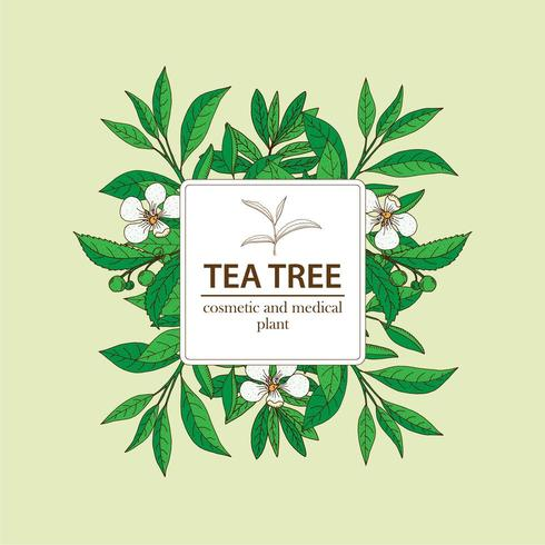 Tea Tree plant under white square frame. Hand drawn herbal background.